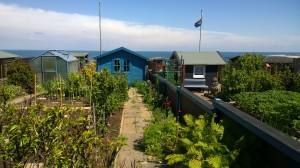 koloni Helgoland
