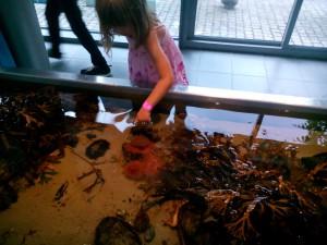 Eleni känner på en sjöanemon