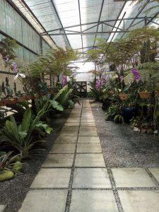 Orchid Garden, Kuching kallväxthuset