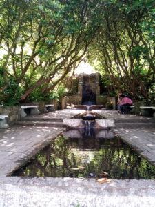 damm vattenträdgården