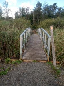 Bro genom sankmark Åsljungasjön