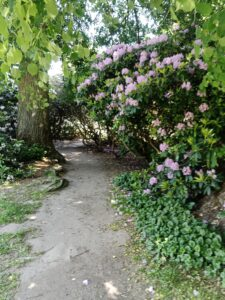 Rhododendrontunnel